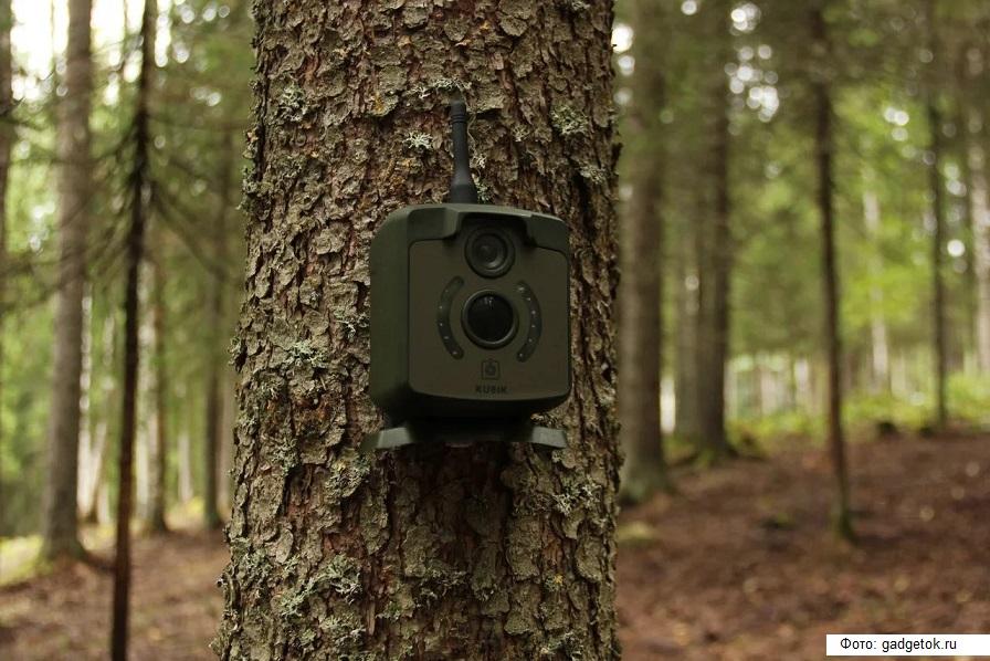 В Подмосковье с мусором в лесах борются при помощи фотоловушек
